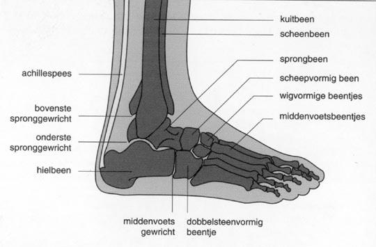 gebroken voet